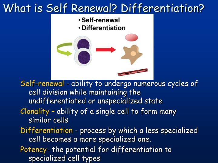 Self-renewal