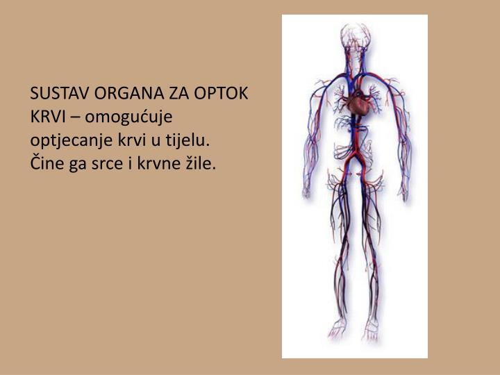 SUSTAV ORGANA ZA OPTOK KRVI – omogućuje optjecanje krvi u tijelu. Čine ga srce i krvne žile.