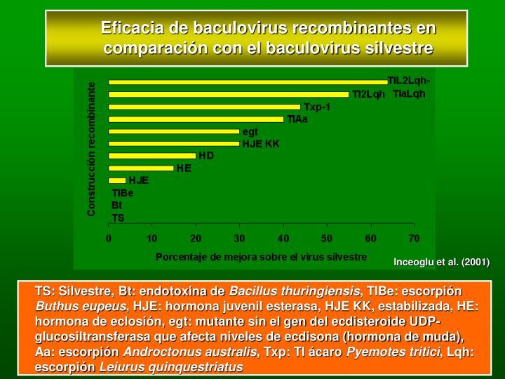 Eficacia de baculovirus recombinantes en comparación con el baculovirus silvestre