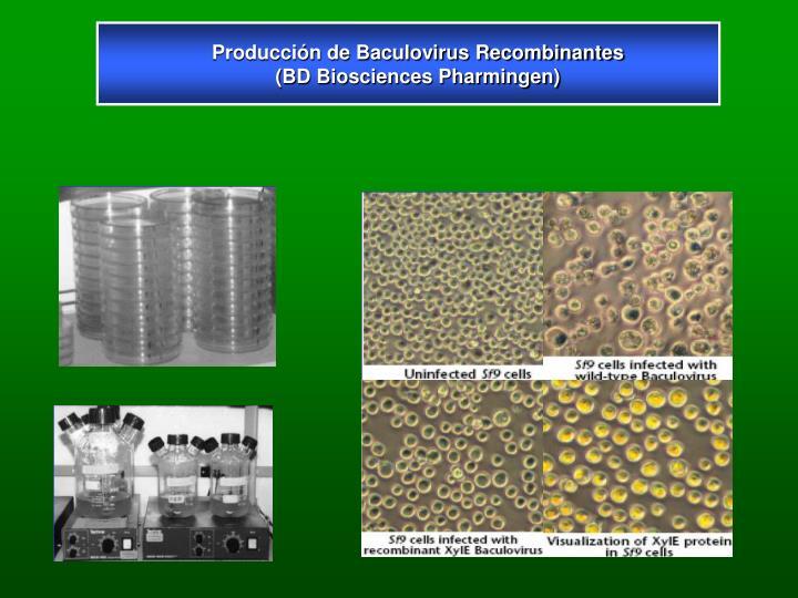 Producción de Baculovirus Recombinantes (BD Biosciences Pharmingen)