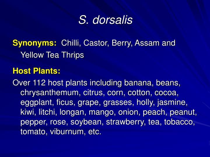 S dorsalis