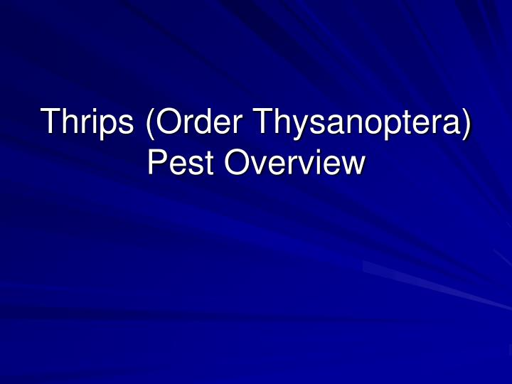 Thrips (Order Thysanoptera)