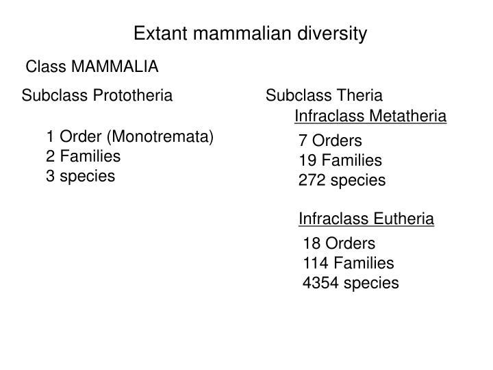 Extant mammalian diversity