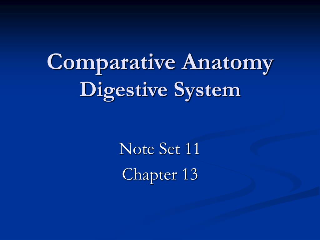 Ppt Comparative Anatomy Digestive System Powerpoint Presentation