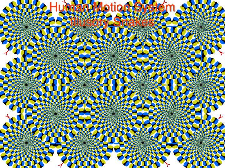 Human Motion System