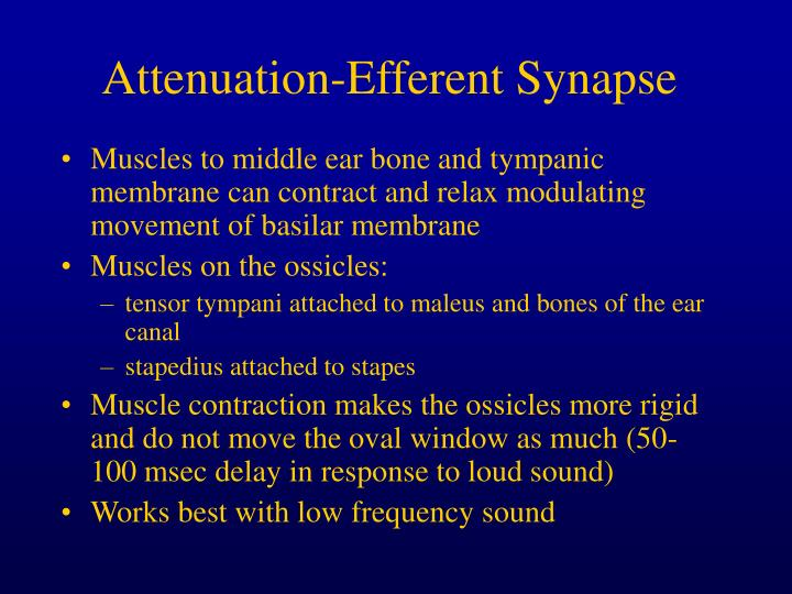 Attenuation-Efferent Synapse