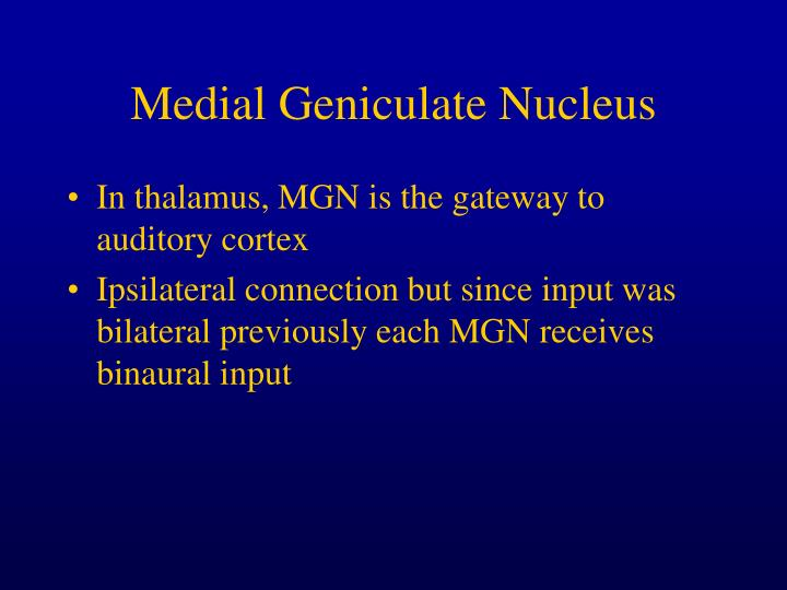 Medial Geniculate Nucleus
