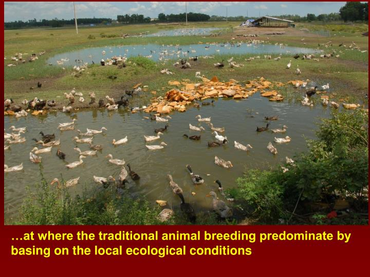 …at where the traditional animal breeding predominate by basing on the local ecological conditions