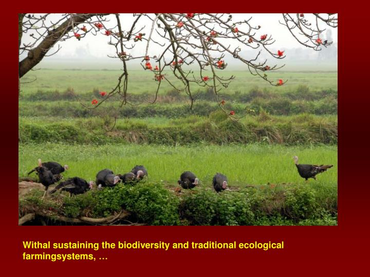 Withal sustaining the biodiversity and traditional ecological farmingsystems