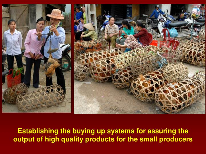 Establishing the buying up systems for assuring the output of high quality products for the small producers