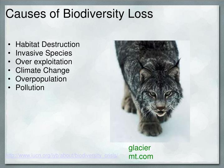 Causes of Biodiversity Loss