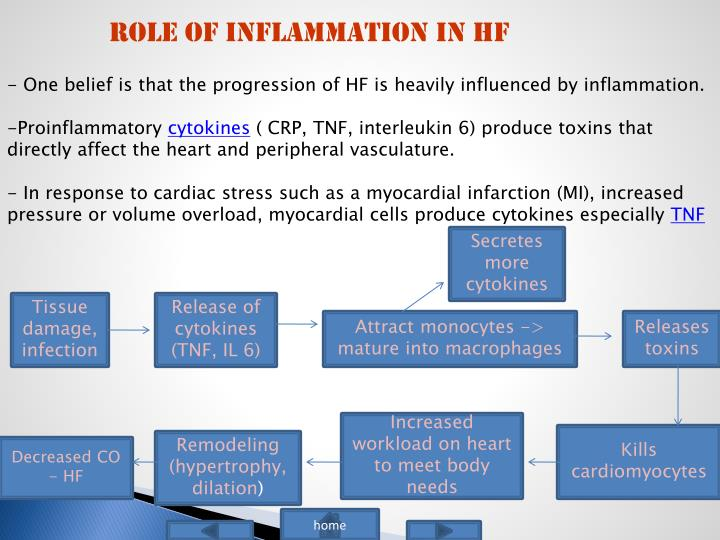 Role of Inflammation in HF