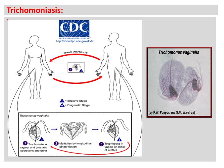 an overview of chlamydia a common sexually transmitted infection of the urogenital tract in the unit Treatment of urinary tract infections depends on the isolation and -most diseases of the reproductive system are sexually transmitted diseases (stds) -c trachomatis infection is the most common std.