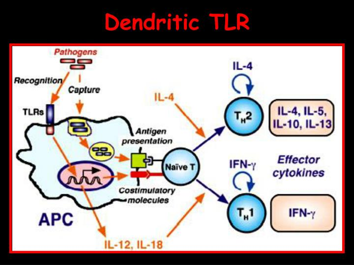 Dendritic TLR