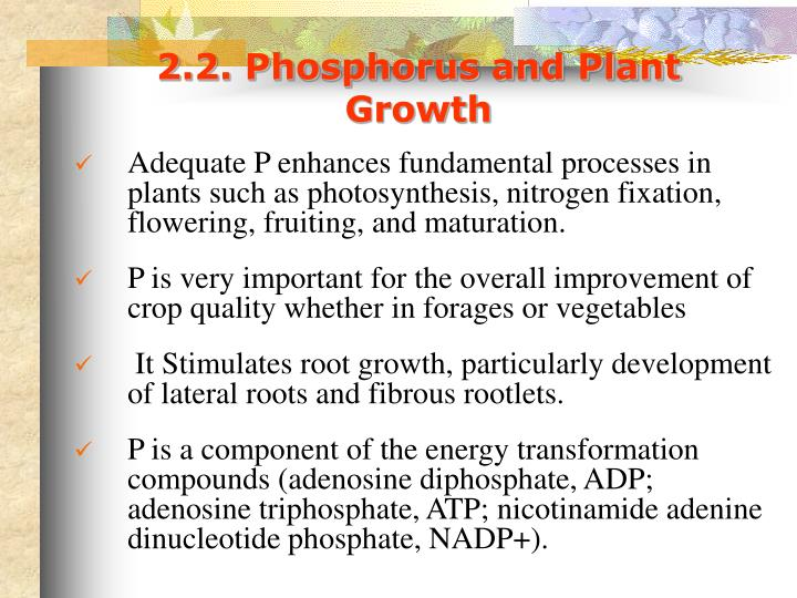 2.2. Phosphorus and Plant Growth