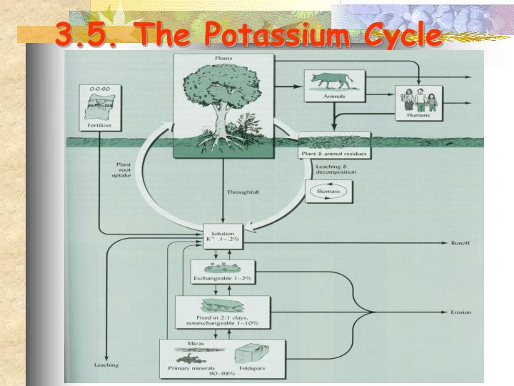 3.5. The Potassium Cycle