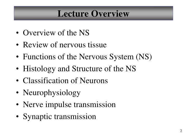 PPT - Chapter 11 Fundamentals of the Nervous System and Nervous ...