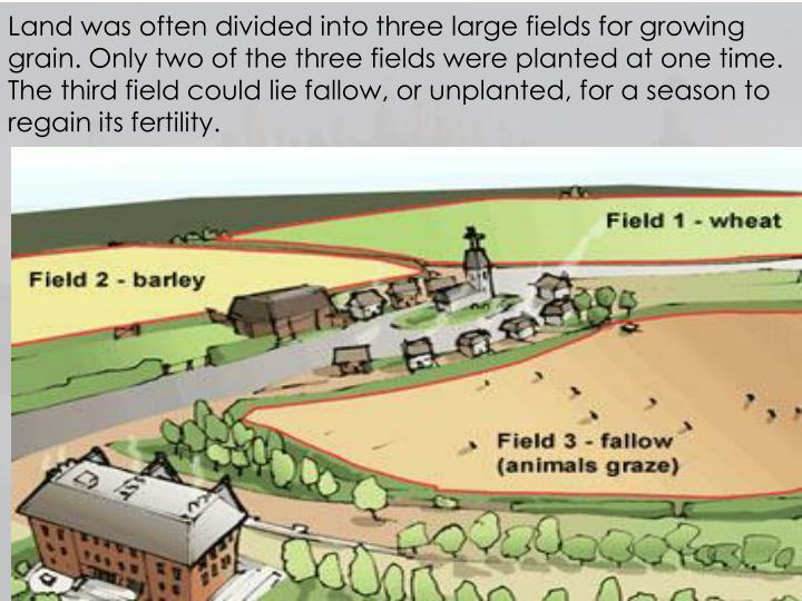 Land was often divided into three large fields for growing grain. Only two of the three fields were planted at one time. The third field could lie fallow, or unplanted, for a season to regain its fertility.