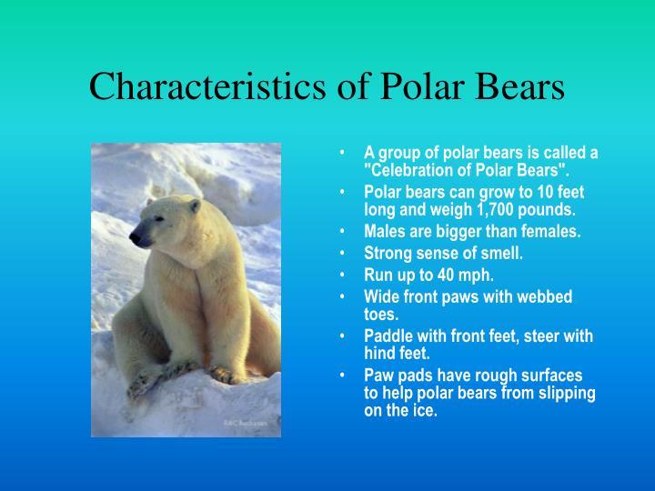 Characteristics of polar bears