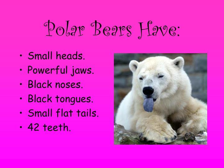Polar bears have