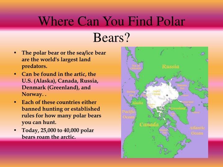 Where Can You Find Polar Bears?