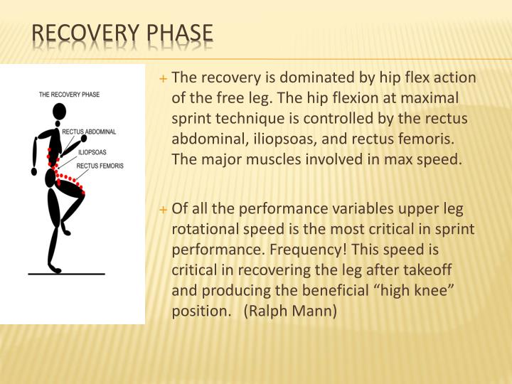 The recovery is dominated by hip flex action of the free leg. The hip flexion at maximal sprint technique is controlled by the rectus abdominal,