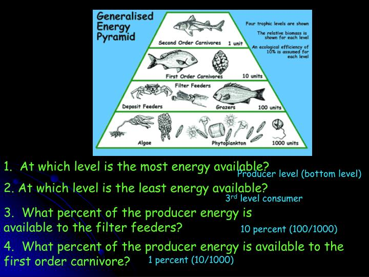1.  At which level is the most energy available?