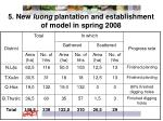 5 new luong plantation and establishment of model in spring 2008