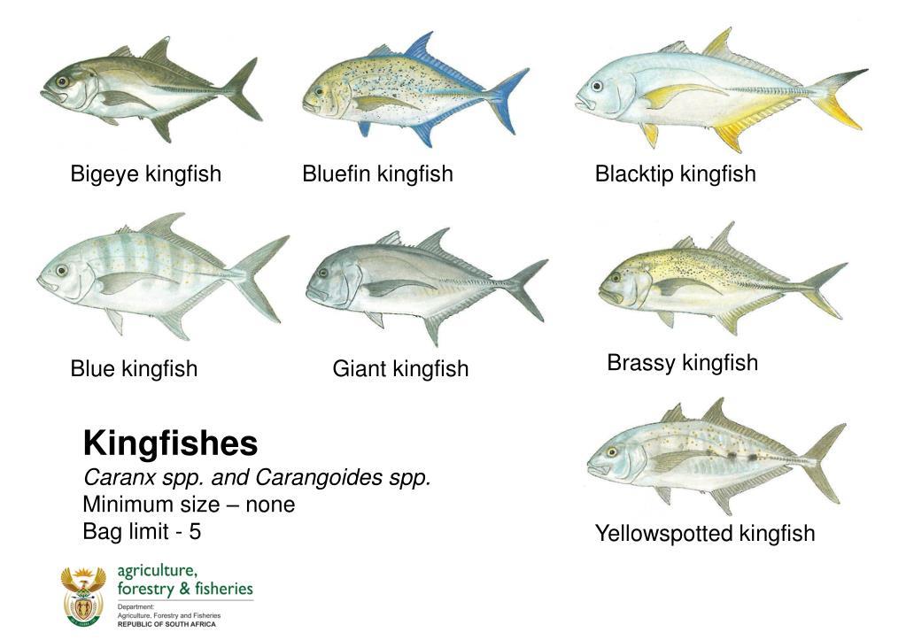 Fischarten Liste