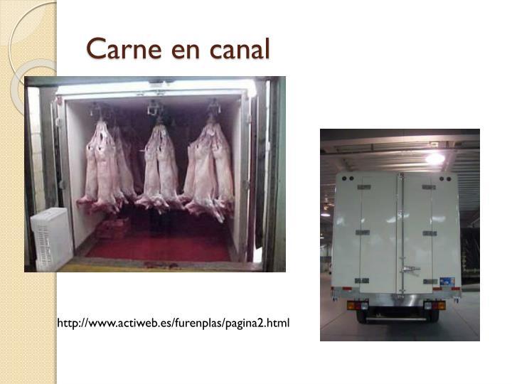 Carne en canal
