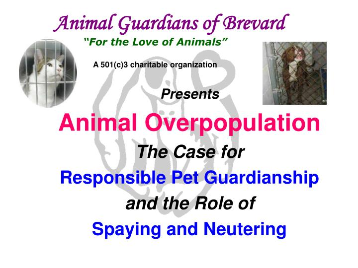 pet overpopulation research paper Mandatory pet sterilization and overpopulation: mandatory pet sterilization and recipient of the 2011 smith award for excellence in research research paper.