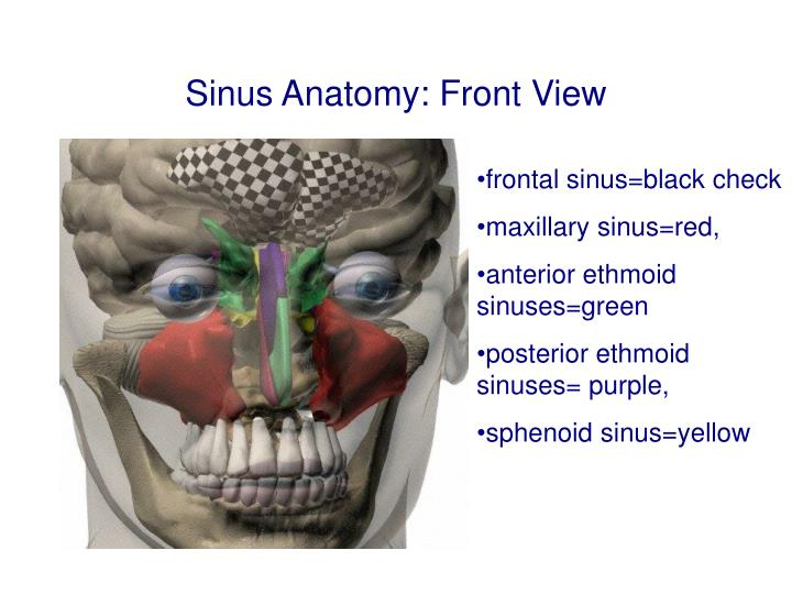 Ppt Physical Diagnosis Scalp Earsnose Sinuses Powerpoint