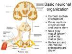 basic neuronal organization