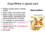 gray white in spinal cord