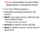 nerves are bundles of nerve fibers long axons in connective tissue