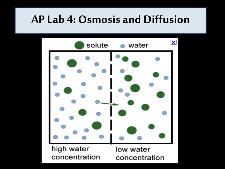 osmosis and diffusion on different concentrations of Osmosis and diffusion, while related, are not exactly the same thing diffusion is defined as the movement of molecules from an area of high for example, if carbon dioxide gas is released in the center of a room, it slowly diffuses throughout the room until the concentration of carbon dioxide is.