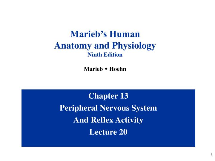 PPT - Chapter 13 Peripheral Nervous System And Reflex Activity ...