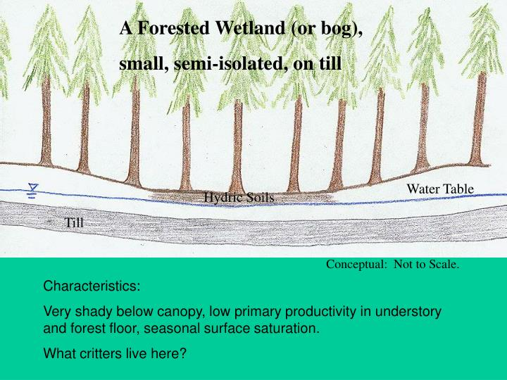 A Forested Wetland (or bog),