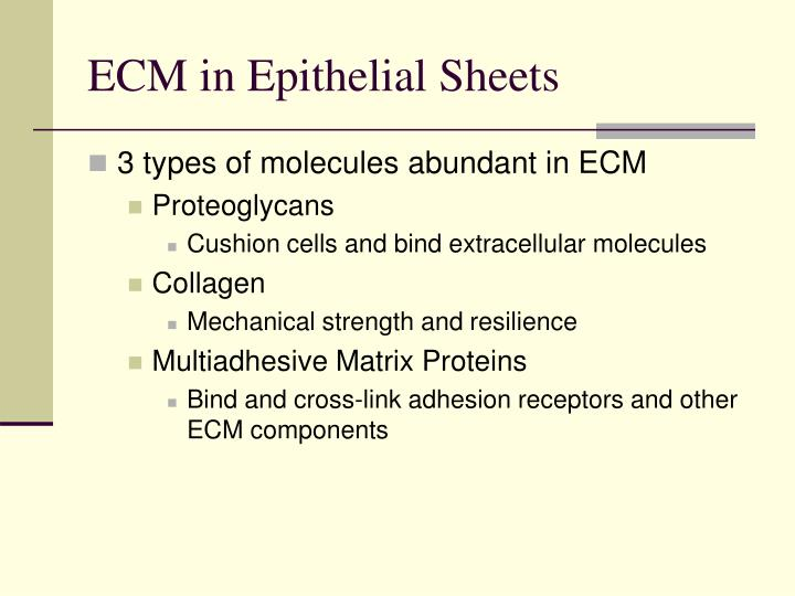Ecm in epithelial sheets