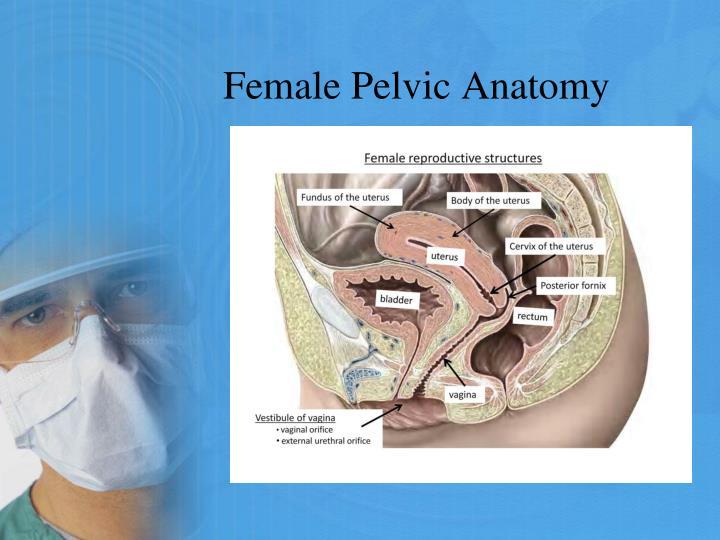 Ppt Total Laparoscopic Hysterectomy Powerpoint Presentation Id