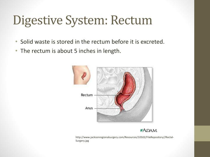 PPT - Human Body Systems Project PowerPoint Presentation ...