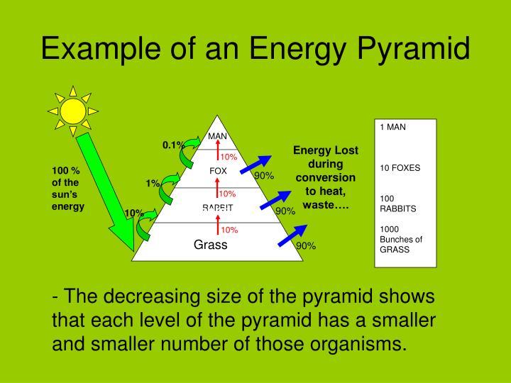 Energy Pyramid Percentages Energy Pyramid 10 Perc...