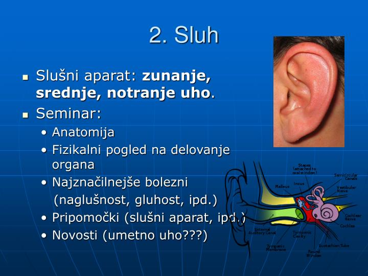 2. Sluh