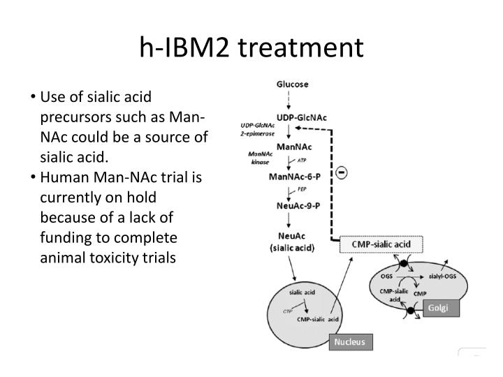 h-IBM2 treatment
