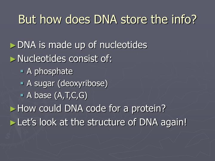 But how does DNA store the info?