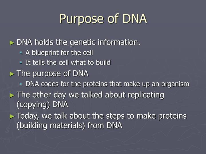 Purpose of DNA