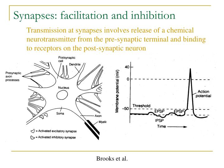 Synapses: facilitation and inhibition