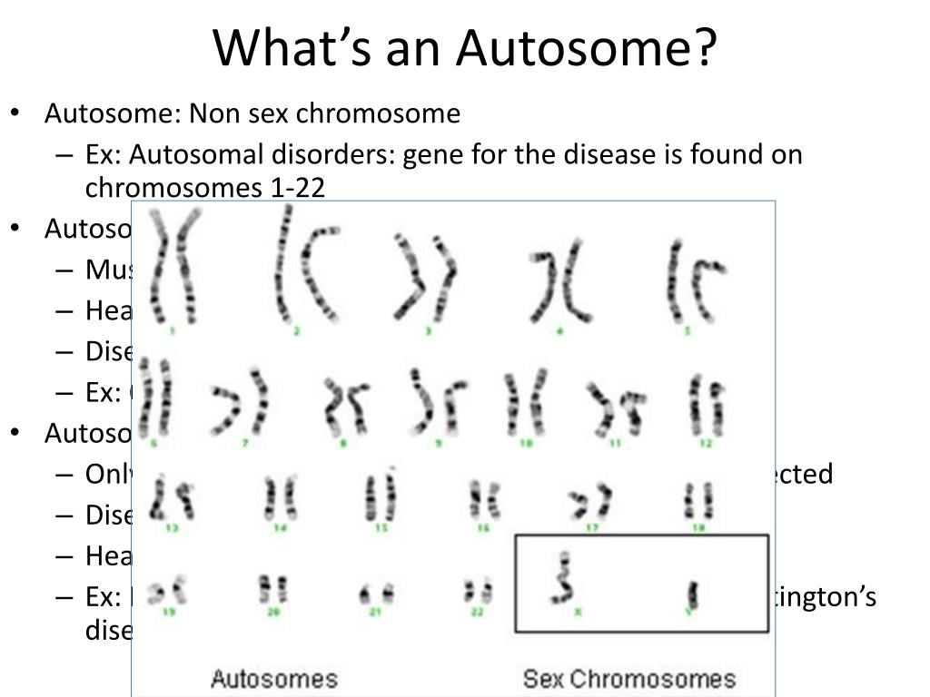 how many chromosomes are in sex cells compared to somatic cells in humans in Tennessee