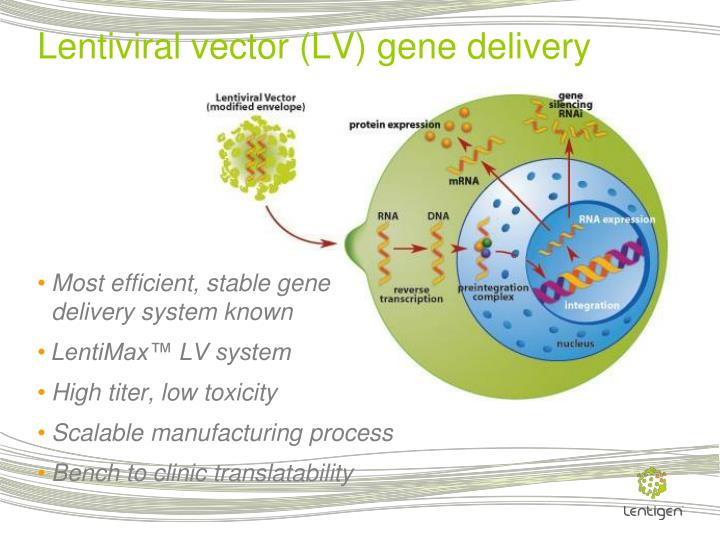 Most efficient, stable gene delivery system known