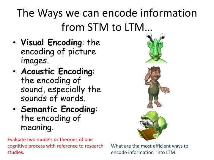 The Ways we can encode information from STM to LTM…